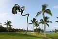 Unusual Arecaceae Big Island of Hawaii.jpg