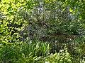 Urpolan luontopolku ja suojelualue, Urpola nature trail, Mikkeli, Finland.jpg