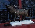 Vallons de la Meige Deer.JPG
