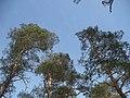 Vangaži - panoramio.jpg