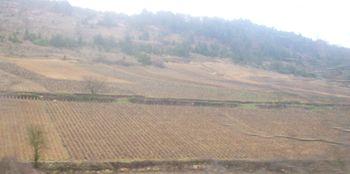 Vignoble de Saint-Aubin 2.JPG
