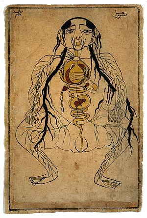 Viscera with fetus in utero, watercolour, Persian, 19th C Wellcome L0020503.jpg