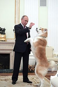 Vladimir Putin and Yume (2016-12-13) 01.jpg