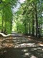 Vyžlovský rybník (016).jpg
