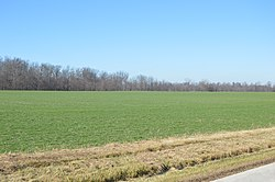 Young winter wheat fields on Wabash Road
