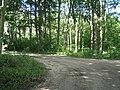 Wald bei Kalkhorst - geo.hlipp.de - 15371.jpg