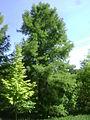 Warsaw. Powsin. Botanical Garden 192.JPG