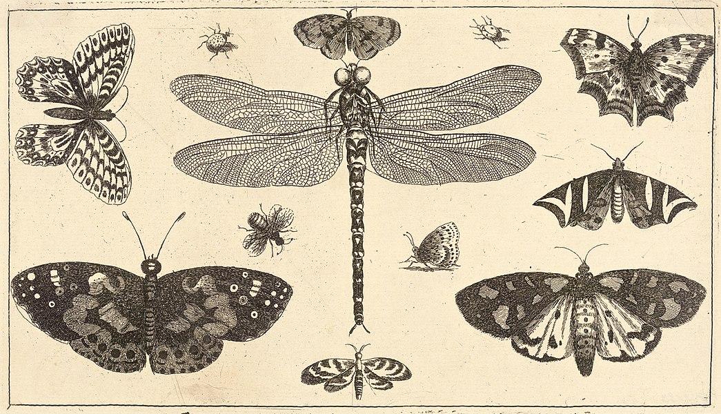 butterflies - image 1