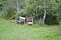Wessel grove - NNE part of front yard - Tinsley Living Farm - Museum of the Rockies - 2013-07-08.jpg