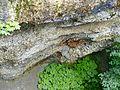 WikiProjekt Landstreicher Geotop Scheidegger Wasserfälle 03.jpg