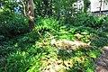 Wikipedia 13. Fotoworkshop Botanischer Garten Erlangen 2013 by-RaBoe 033.jpg