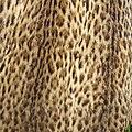 Wild cat vest (2).jpg