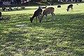 Wildpark Bruderhaus - panoramio (8).jpg