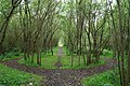 Willow fairy ring, ECOS Centre, Ballymena - geograph.org.uk - 532858.jpg