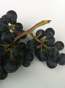 Winged cluster of Merlot.JPG
