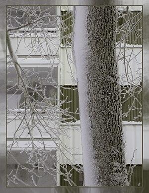 Carulmare Träd i olivgrönt, 2010