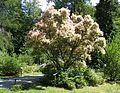 Wirty Arboretum 3.jpg