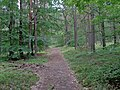 Wolin National Park-path (2).jpg