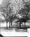 Wooded area on Miami University campus 1906 (3191879113).jpg