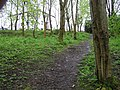 Woodland area at Edinburgh Park (3) - geograph.org.uk - 1270934.jpg