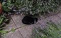 Wraxall 2012 MMB 42 Smudge.jpg