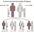 X-chromosomal-dominant-Mutter.png