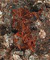 Xocolatlite-214968.jpg