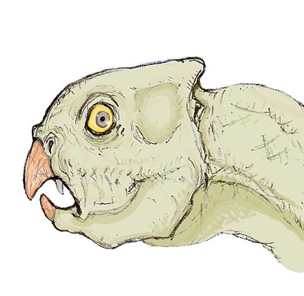Xuanhuaceratops
