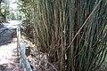 Yasucho Kunimitsu, Konan, Kochi Prefecture 781-5613, Japan - panoramio (2).jpg