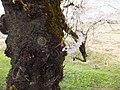 Yatsuomachi Nishijinzu, Toyama, Toyama Prefecture 939-2311, Japan - panoramio (30).jpg