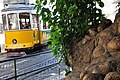 Yellow tram and tree (3970102152).jpg