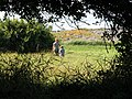 York, Maine Field - panoramio.jpg