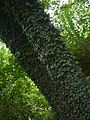 Zelené šaty z Břečtanu.jpg