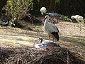 Zoo, Zagreb - bijele rode (04.2102).JPG