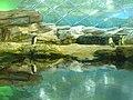 Zoo Berlin - Pinguinhaus (Penguin House) - geo.hlipp.de - 40680.jpg