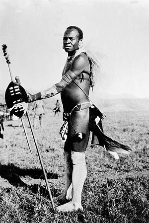 Nguni shield - Image: Zulu male ready for the wedding dance Wellcome M0005308