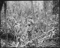 """Cautiously advancing through the jungle, while on patrol in Japanese territory off the Numa-Numa Trail, this member... - NARA - 531184.tif"