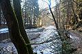 Řeka Metuje v mlžném oparu - panoramio.jpg