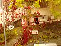 Αράχωβα - panoramio (5).jpg