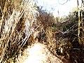 Ρέμα κοκκιναρά 4 - panoramio.jpg