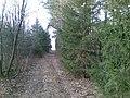 Дорога в лесу. Ноябрь 2008 - panoramio.jpg