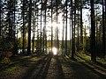 ЗЕЛЕНОГОРСК - Ефрейторское озеро - ТЬМА и СВЕТ (1).jpg