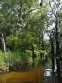 Затоплений ліс на о.Круглик.jpg