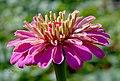 Как прекрасен мир цветов (254438071).jpeg