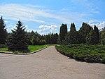 Криворізький ботанічний сад - аллея біля входу.JPG