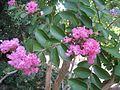 Никитский ботанический сад 2010 04.jpg