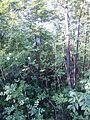 """Парк шума """"Гази Баба"""" 53.jpg"""