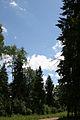 Подмосковье - panoramio.jpg