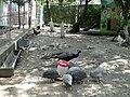 Сафари-парк. Птичий двор - panoramio.jpg