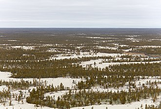 Tukulan sandy area in the taiga of the Central Yakutian Lowland. Sakha (Iakutiia). Polia tukulanov (peschanye diuny). (10118322213).jpg